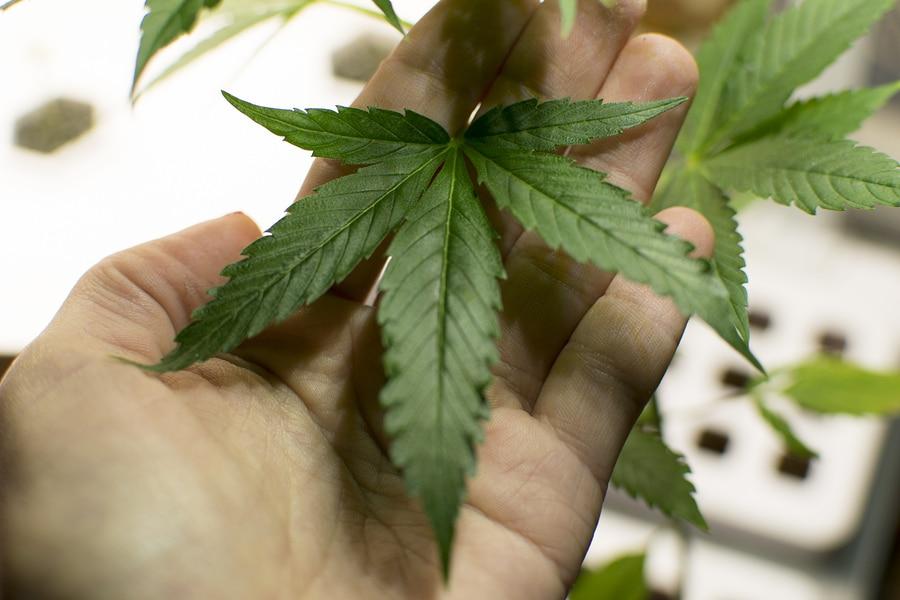 Konsum Von Cannabis