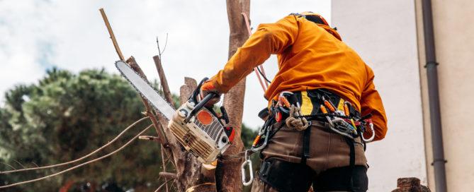 Betriebskostenabrechnung - Umlagefähigkeit von Baumfällkosten