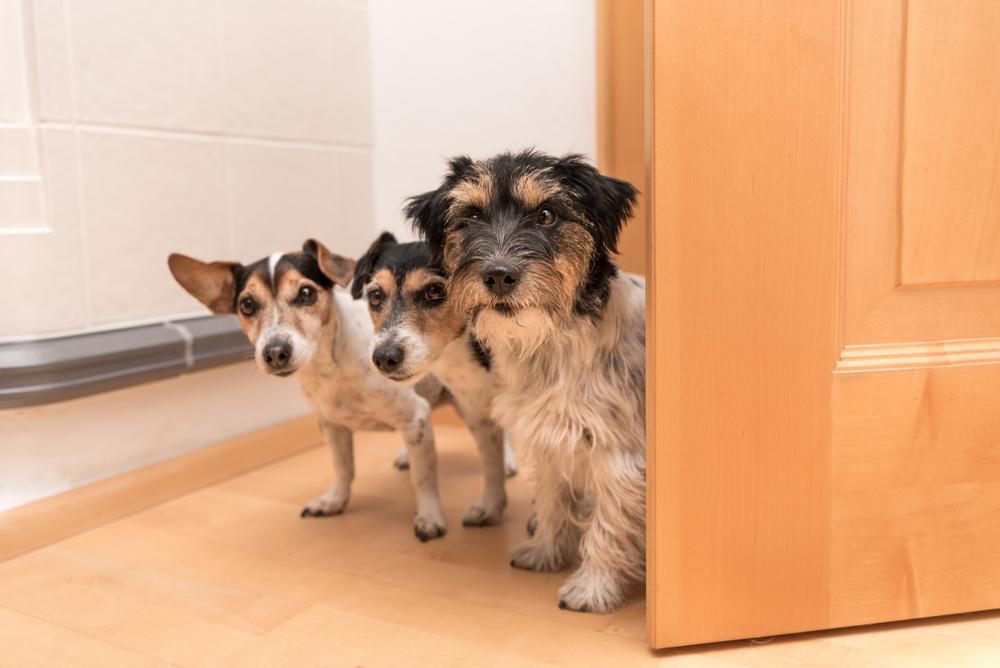 Vertragswidriger Gebrauch bei Haltung mehrerer Hunde in der Mietwohnung