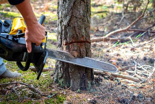 Betriebskosten - Umlagefähigkeit von Kosten der Baumfällung